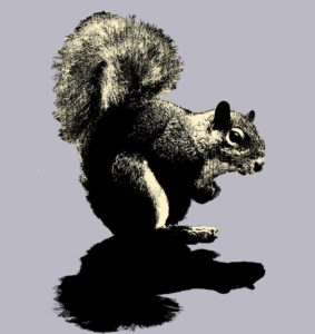 squirrel1_1024x1024